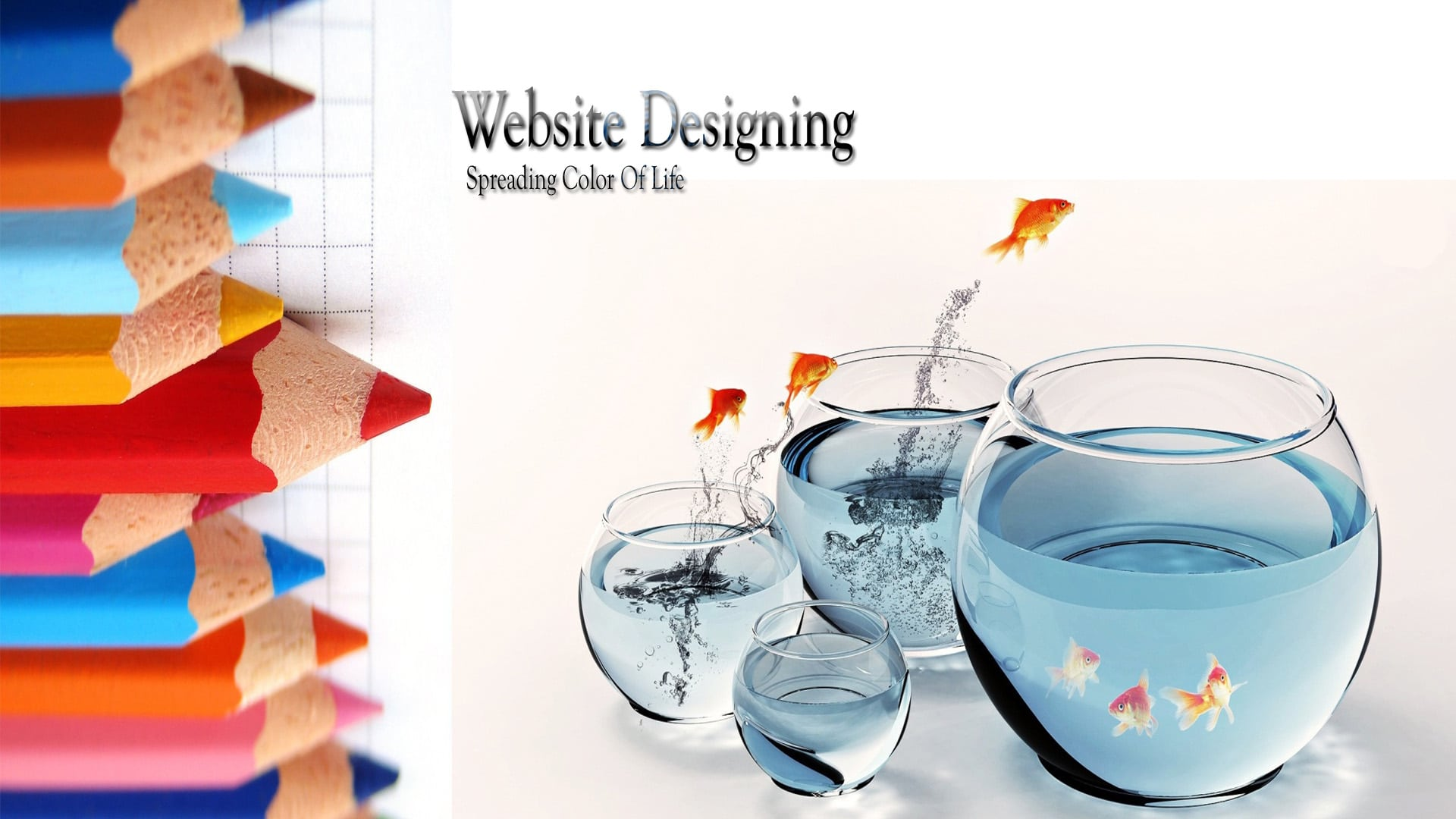 Website Designer Lakewood Township